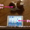 MaBeee(マビー) を使って電池で動くおもちゃを操作している動画